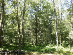 Photo of Lot#1008 Chokeberry Dr, Milford, PA 18337 (MLS # 19-2634)