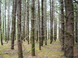 Photo of McTimmonds Rd, Monmouth, OR 97361 (MLS # 719025)