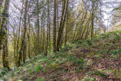 Photo of 4570 Victor Point Rd NE, Silverton, OR 97381-9572 (MLS # 731586)