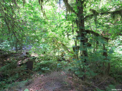 Photo of R41442 North Fork Rd SE, Lyons, OR 97358 (MLS # 743567)