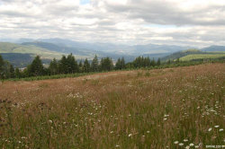 Photo of 40593 N McCully Mountain (Next To) Rd, Lyons, OR 97358-9520 (MLS # 749532)