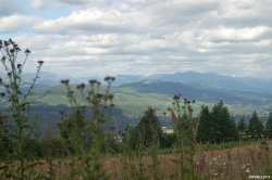 Photo of 40593 N McCully Mountain (Next To, Parcel 2) Rd, Lyons, OR 97358 (MLS # 749604)