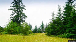 Photo of Mt Home (Parcel #0939475) Rd, Brownsville, OR 97327 (MLS # 766649)