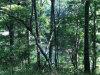 Photo of 0 Beaver Trail, Tallassee, AL 36078 (MLS # 454225)