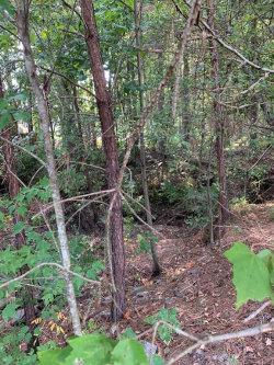 Photo of 0 Timberland Pass, Wetumpka, AL 36092 (MLS # 460778)