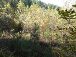 Photo of 3 Leesville Rd, Lot 3, Evington, VA 24550 (MLS # 321468)