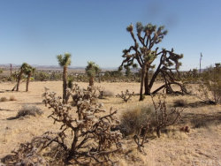 Photo of 6759 Saddleback Road, Joshua Tree, CA 92252 (MLS # JT18027163)