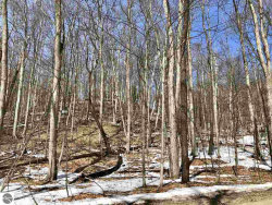 Photo of Lot 4 Spring Valley Road, Beulah, MI 49617 (MLS # 1844937)