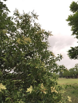 Tiny photo for 0 Rodeo Bend, Dickinson, TX 77539 (MLS # 12947010)