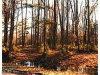 Photo of 2605 Robin Hood Trail, Suffolk, VA 23435 (MLS # 10146543)