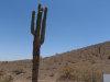 Photo of 396X W Sunrise Drive, Lot -, Laveen, AZ 85339 (MLS # 5626559)