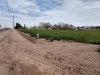 Photo of 12XX S 181st Avenue, Lot -, Goodyear, AZ 85338 (MLS # 5732605)