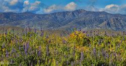 Photo of 0 N Columbia Mine Road, Lot 86, Morristown, AZ 85342 (MLS # 5759158)