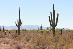Photo of 374XX N 239th Avenue, Lot 503-86-002Y, Morristown, AZ 85342 (MLS # 5777239)