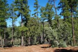Photo of Lot 53 Big Als Run Run, Lot 53, Christopher Creek, AZ 85541 (MLS # 5832017)