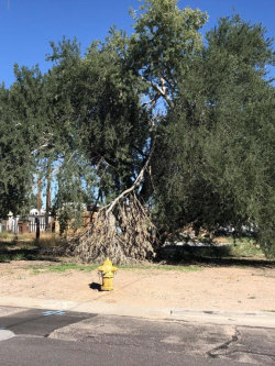 Photo of 549 S 99th Street, Lot 136, Mesa, AZ 85208 (MLS # 5836097)