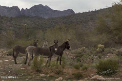Photo of 0xx N Lake Pleasant Avenue, Lot 40 acres, Morristown, AZ 85342 (MLS # 6003533)