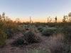 Photo of 0 E Palm Lane, Lot Parcel A, Mesa, AZ 85207 (MLS # 6112536)