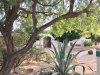 Photo of 7325 E Cholla Lane, Scottsdale, AZ 85250 (MLS # 6122113)