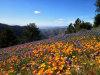Photo of 1214 Cuesta Street, Santa Ynez, CA 93460 (MLS # 1073807)