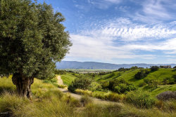 Photo of 2775 Roundup Road, Santa Ynez, CA 93460 (MLS # 19000686)