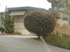 Photo of 355 W Clark Avenue, Unit 24, Santa Maria, CA 93455 (MLS # 20002219)