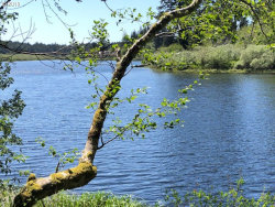 Photo of Sutton Lake RD, Florence, OR 97439 (MLS # 19428976)