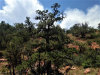 Photo of 235 Off Of W Kings Ranch Road, Ash Fork, AZ 86320 (MLS # 1014680)