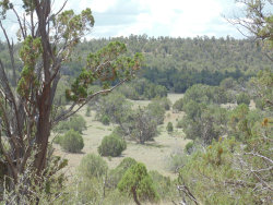 Photo of 79 Forest Acres Ranch, Seligman, AZ 86337 (MLS # 1022548)