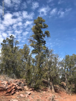Photo of 134 Lightning Trail, Ash Fork, AZ 86320 (MLS # 1028063)
