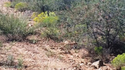 Photo of 0 Iron Springs Road, Skull Valley, AZ 86338 (MLS # 989550)