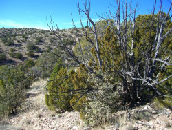 Photo of 68 Howling Wolf Road, Ash Fork, AZ 86320 (MLS # 995395)