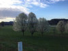 Photo of 1415 Middle Creek Rd, Sevierville, TN 37862 (MLS # 1034293)