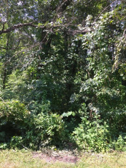 Photo of 239 Chuniloti Way, Lot # 25, Loudon, TN 37774 (MLS # 1052813)