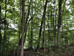 Photo of Lots 29&30 Broyles Drive, Lot # 29 & 30, Caryville, TN 37714 (MLS # 1054129)