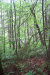Photo of 140 Springside Way, Lot # 116, Townsend, TN 37882 (MLS # 1056808)