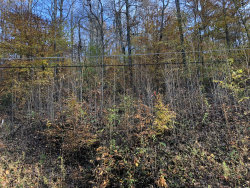 Photo of Hiwassee View Dr Lots 175,176, Lot # 175 & 176, Jacksboro, TN 37757 (MLS # 1062803)