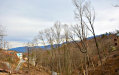 Photo of 422 Edgewood Drive, Lot # 416, Gatlinburg, TN 37738 (MLS # 1070000)