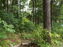 Photo of Hiwassee Drive, Jacksboro, TN 37757 (MLS # 1072192)