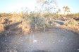 Photo of 11929 Silver Rock Road, Pinon Hills, CA 92372 (MLS # 486435)
