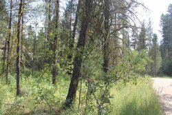 Photo of 1464 Crown Point Parkway, Cascade, ID 83611 (MLS # 98697010)