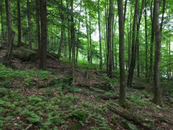 Photo of Houck Mountain Road, East Branch, NY 13756 (MLS # 4219127)