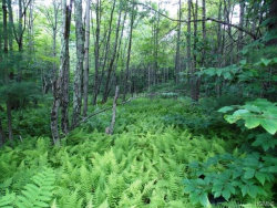 Photo of Red Hill Road, Claryville, NY 12725 (MLS # 4732385)