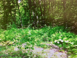Photo of South White Rock Road, Holmes, NY 12531 (MLS # 4741095)