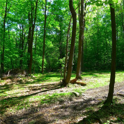 Photo of Clove Road, Blooming Grove, NY 10914 (MLS # 4849991)