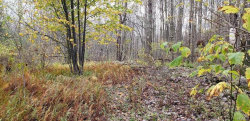 Photo of Anderson Road, Parksville, NY 12768 (MLS # 4914550)