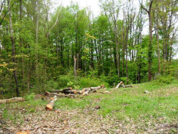 Photo of Rosalind, Lot 8S, 9S, 10S & 11S, Rootstown, OH 44272 (MLS # 3999488)