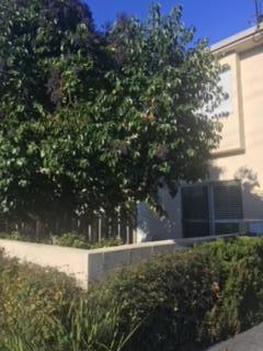 Photo of 518 N Claremont ST 2, SAN MATEO, CA 94401 (MLS # ML81691996)