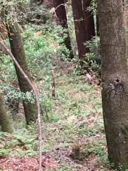 Photo of XOXO Redwood, APTOS, CA 95003 (MLS # 81668133)