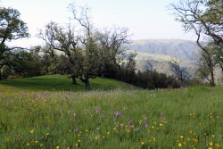 Photo of 11 Long Ridge TRL, CARMEL, CA 93923 (MLS # ML81646406)
